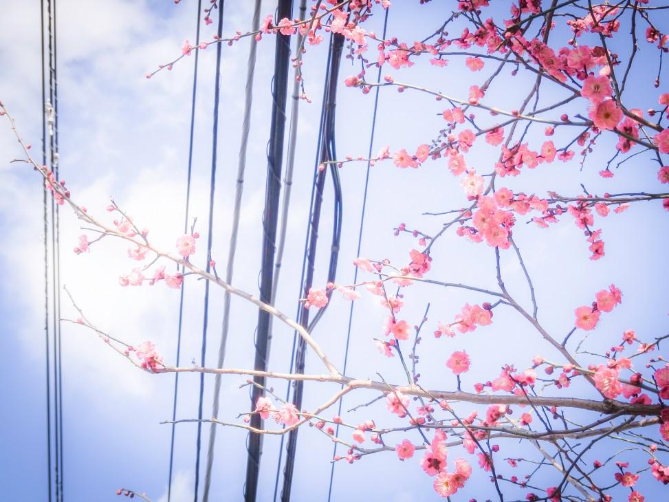 Copyright:Yuri Ito @yurio_it